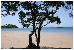 Coopers-Beach-Northland